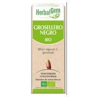 Ribes Nero Macerato Glicerinato