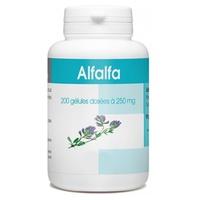 Alfalfa feuille