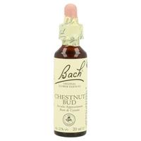 Chestnut Bud (Brote de Castaño)