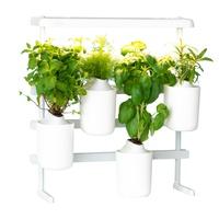 Modulo - ewolucyjny ogród warzywny