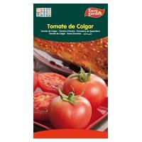 Graines de tomates suspendues