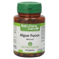 Glony Fucus