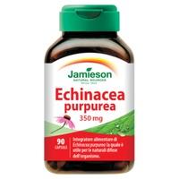 Echinacea Purp