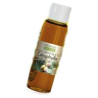 Calophylle aceite vegetal
