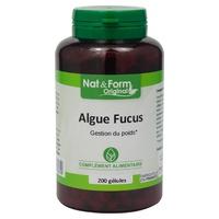 Algas de Fucus