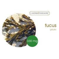 Fucus thalle