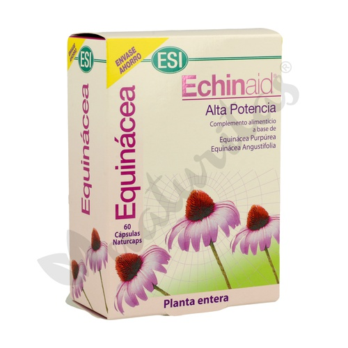 Echinaid
