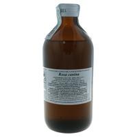 Rosa Canina Bud extract