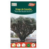Wyspy Kanaryjskie Dragon Tree Seeds