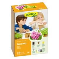 Geranium seeds