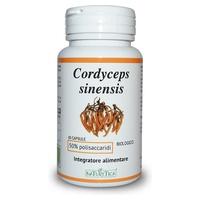 Cordyceps Sinesis Bio