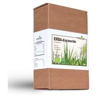 Hierba de trigo orgánico