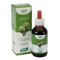 Lipo plant # 04