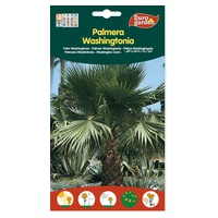 Whashingtonia Filifera Nasiona palmy