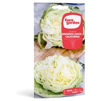 California Great Lakes Lettuce Seeds