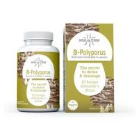 B-Polyporus