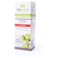 Organic olive tree - Olea europea