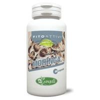 Moringa phytoactif