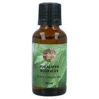 Eukalyptus Globulus Bio ätherisches Öl