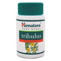 Gokshura tribulus