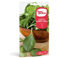 Giant Winter Spinach Seeds - Santo
