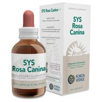 SYS Rosa Canina