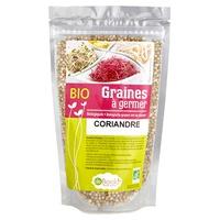 Semillas para germinar - Cilantro Bio