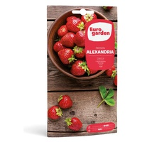 Alexandria Strawberry Seeds