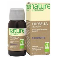 Pilosella Hieracium