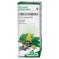 Carduus Marianus TM 06