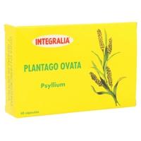 Plantago Ovata