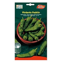 Nasiona papryki Padrón