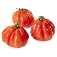 Tomate Marmalindo Bio