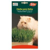 Sementes de Ervas para Gatos