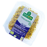 Brotes Germinados de Col Kale Bio